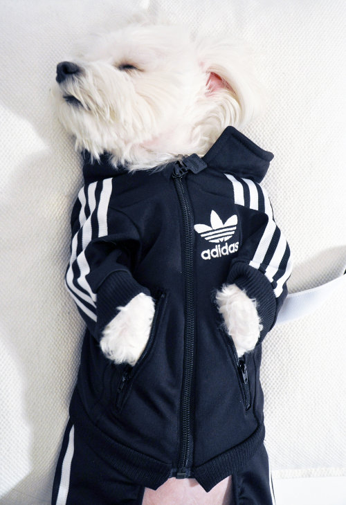 DoggIY: A Custom Dog Tracksuit