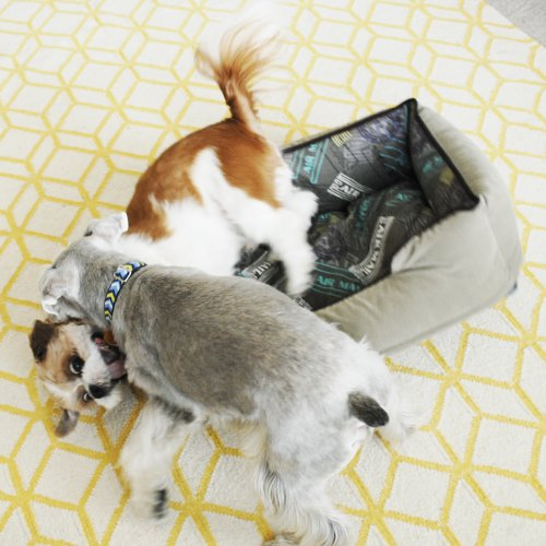 Review: Voyager Lounge Bed by P.L.A.Y. Pet Lifestyle and You