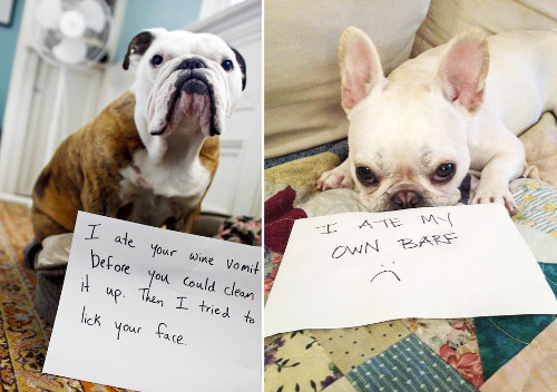Bark Out Loud: What is Your Dog's Shameful Confession?