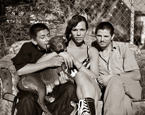 Spotted: Tom Andrews' Street Dogs