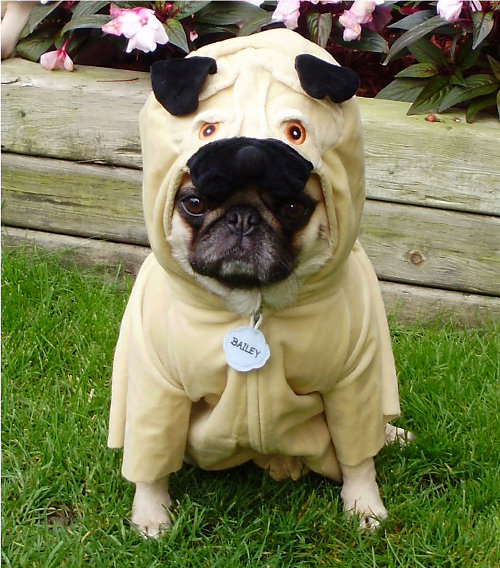 Bark Out Loud: Trick-or-Treaters: Adorable or Your Dog's Worst Enemy?