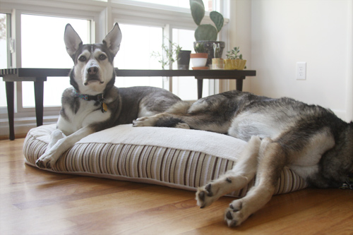 Mingus & Dottie Try It: Essentia Kingston Memory Foam Dog Bed