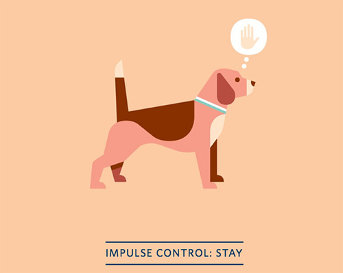 Positively Dog Training: The Better Path to a Well-Behaved Pup iPhone and iPad App