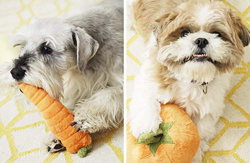 Review: Garden Fresh Plush Toys from P.L.A.Y. Pet Lifestyle and You