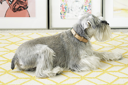 Converse Collection: Modern Collars and Leads from Mungo & Maud