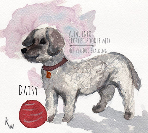 Dog Stalking: Canine Portraits and Illustrations by Kate Wong