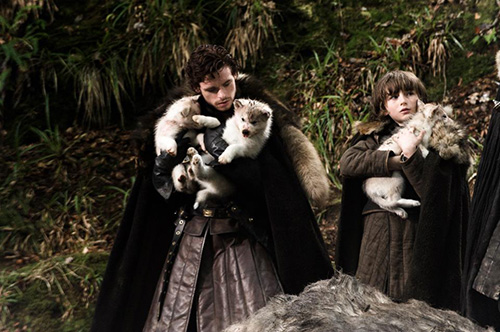 American Alsatian: Modern-Day Dire Wolves - Game of Thrones