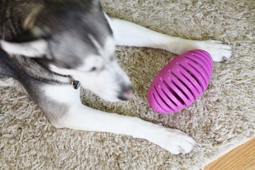 Mingus & Dottie Try It: Petprojekt Holobal and Holobon Toys