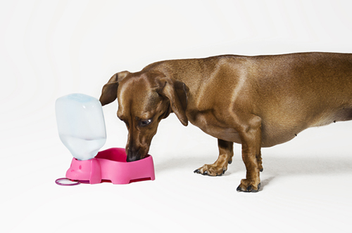 Colorful Dog Bowls and Accessories by Julia Muller Dias