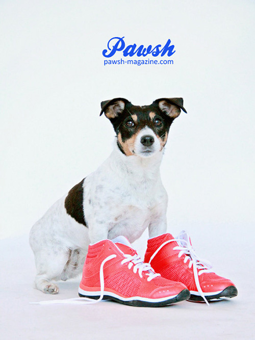 Introducing the PAWSH Print Shop from Pawsh Magazine