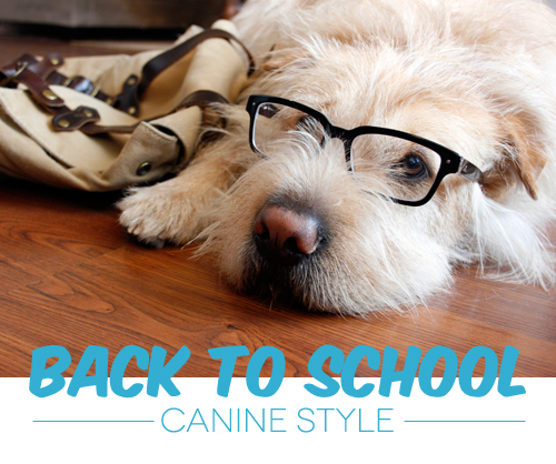 Back to School: Canine Style