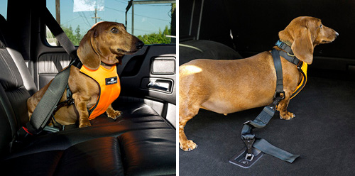 Clickit Utility 3-Point Dog Safety Harness from Sleepypod