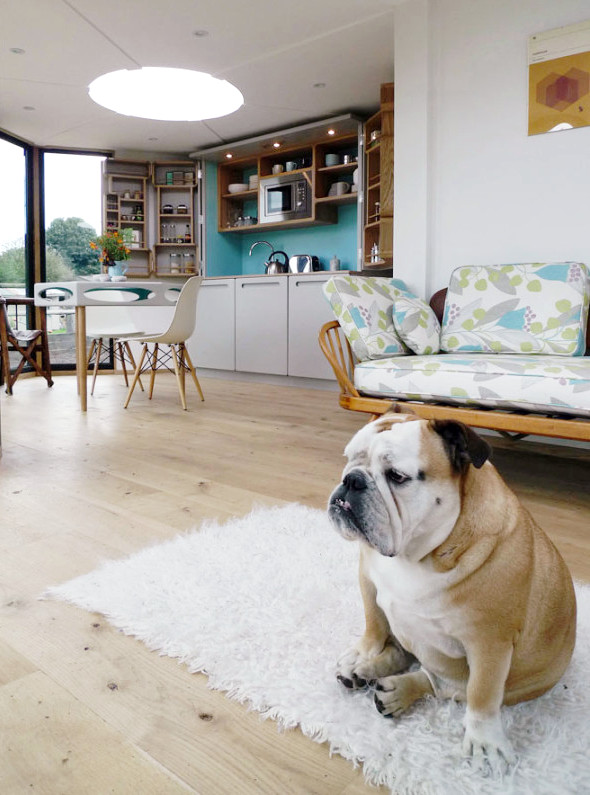 Spotted: Bulldog in a HiveHaus