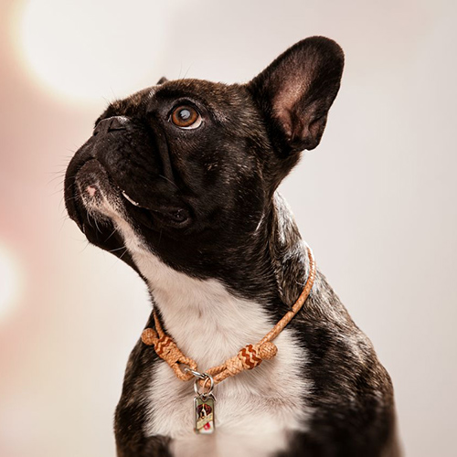 The Lounge Collar from blanketID