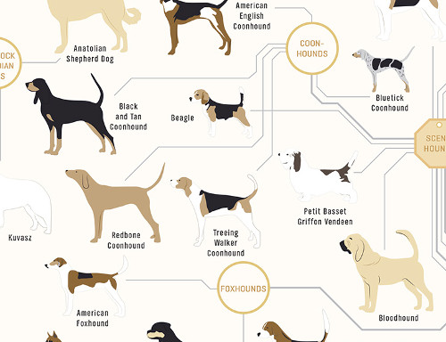 The Diagram of Dogs Poster by Pop Chart Lab