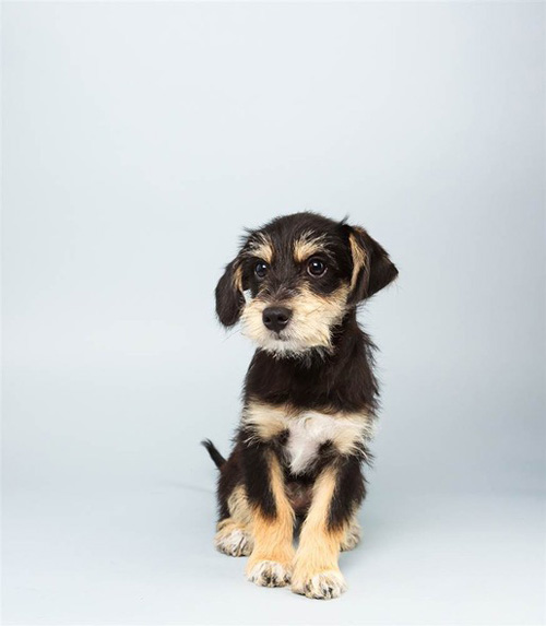 2014 Animal Planet Puppy Bowl Lineup