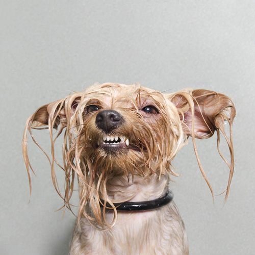 sophie-gamand-wet-dog-series-3
