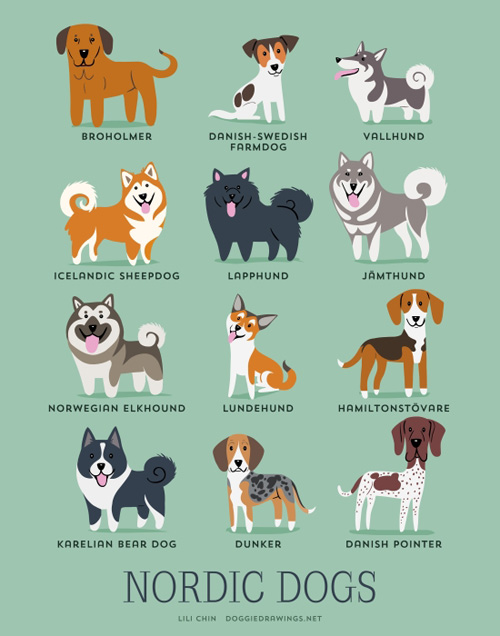 nordic-dogs-illustration-by-lili-chin