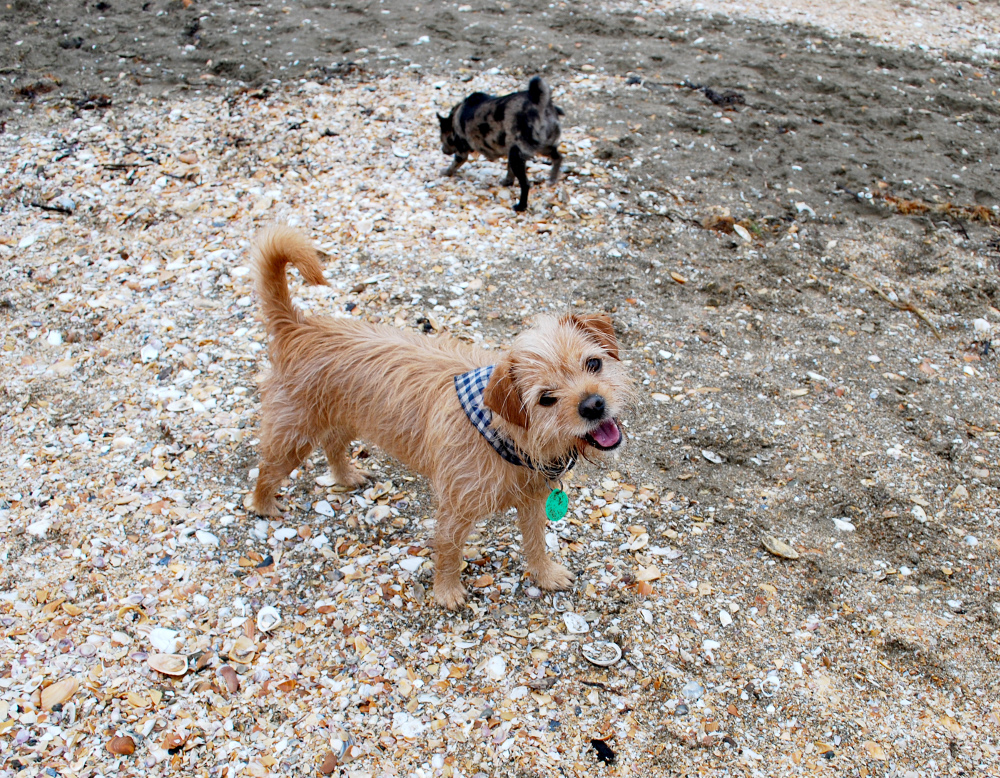 The Scoop: Evie Kemp, Bonnie and Pebbles