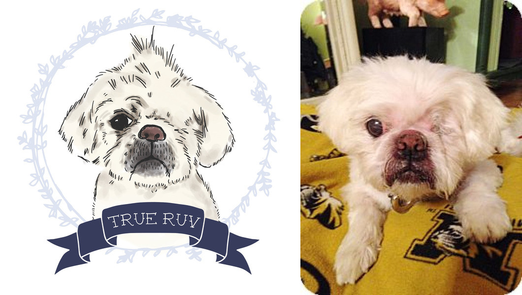 PUP ART: A Show For Fluffy Singles from Bark & Co.