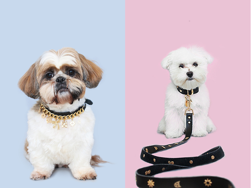 Limited Edition Karen Walker Dog Collars and Leashes