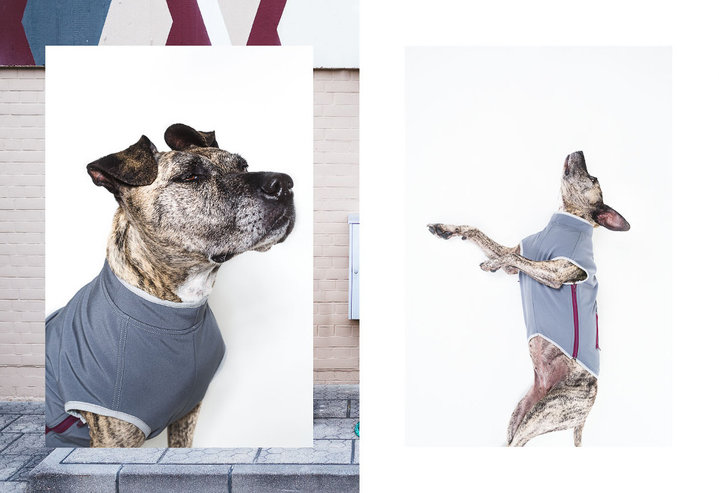 Tailored Dog Apparel from happystaffy.me