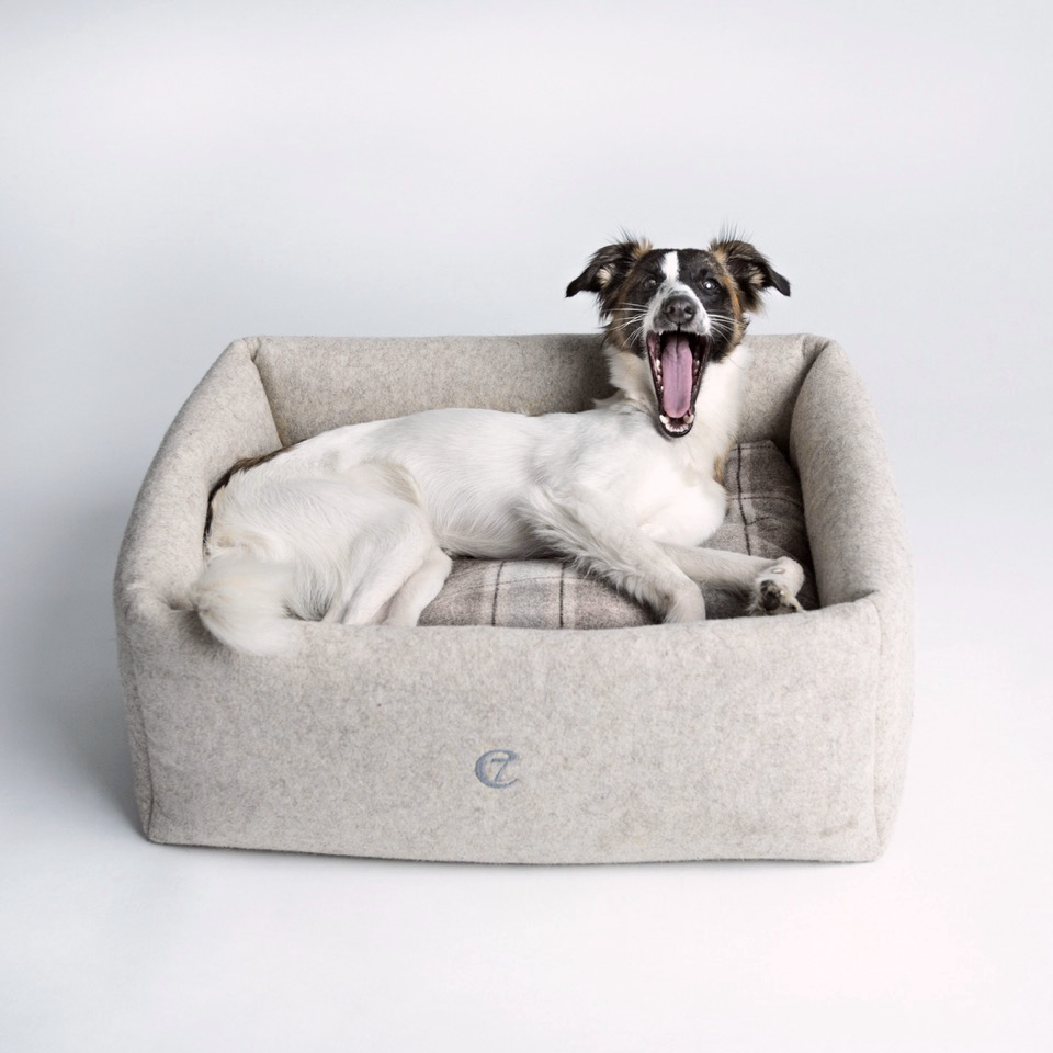 'Little Nap' Dog Bed from Cloud7