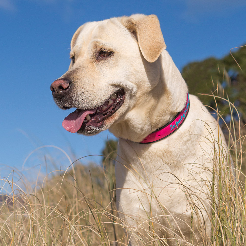 Waterproof Collars from The Dog Street