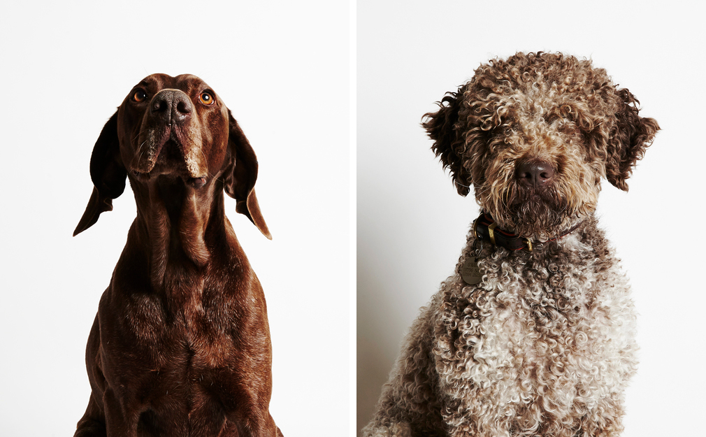 Dog Portraits from The Little Portrait Company