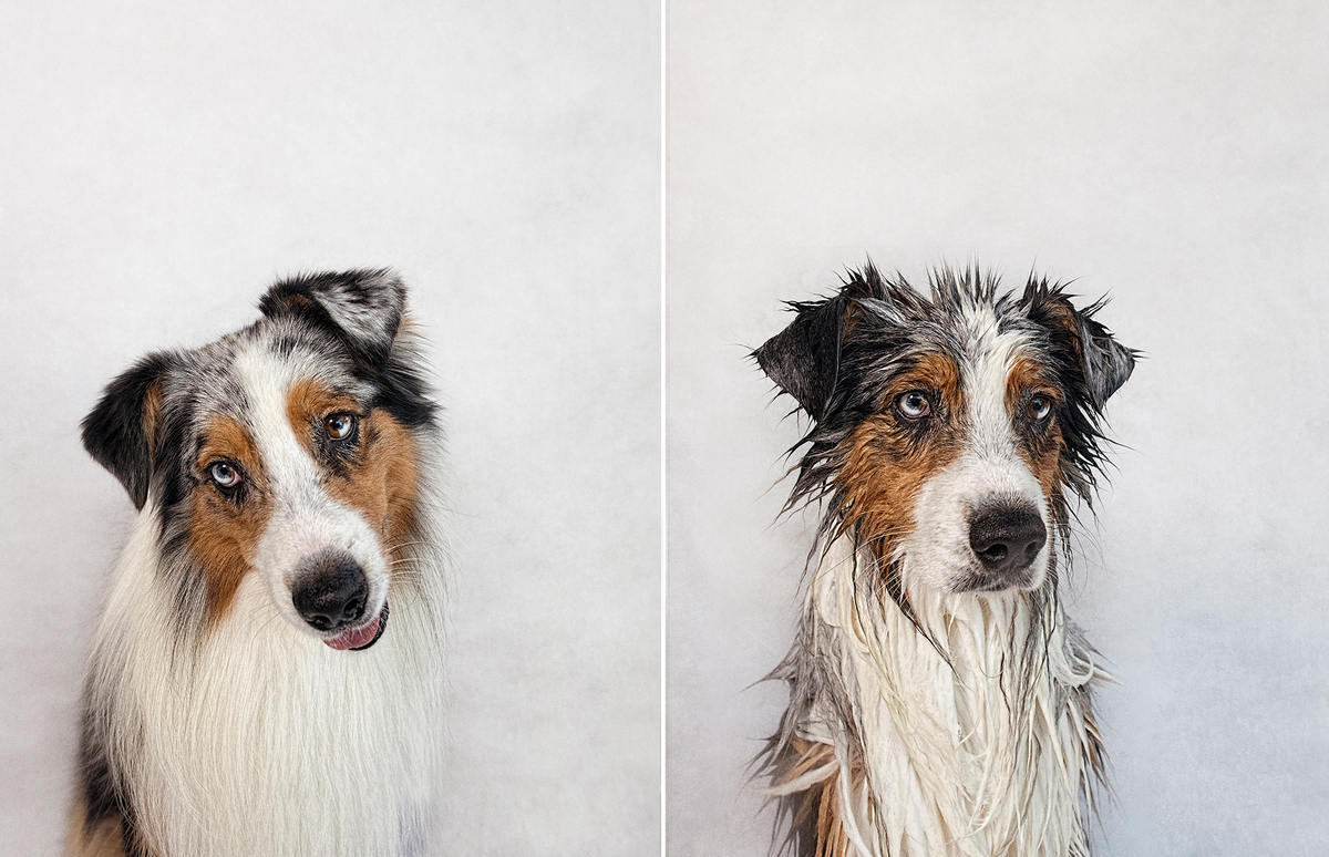 Dry Dog Wet Dog Photo Series by Serena Hodson