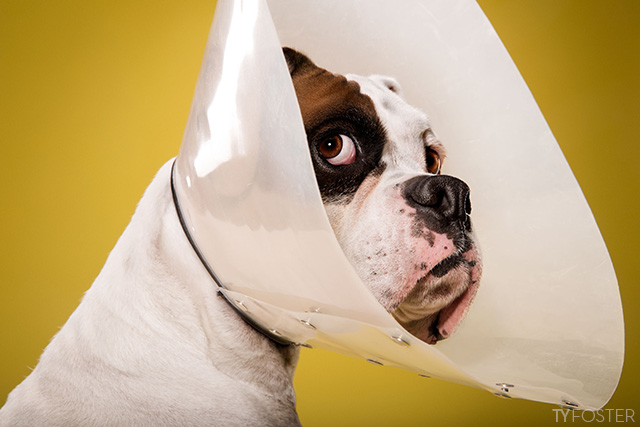 'Timeout' Cone of Shame Photo Series by Ty Foster
