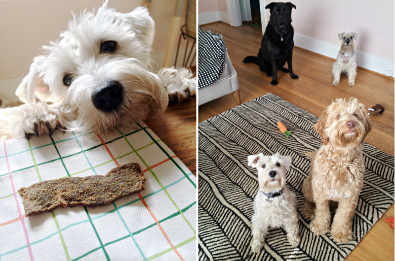 Look Who's Happy Dog Treat Review and Giveaway