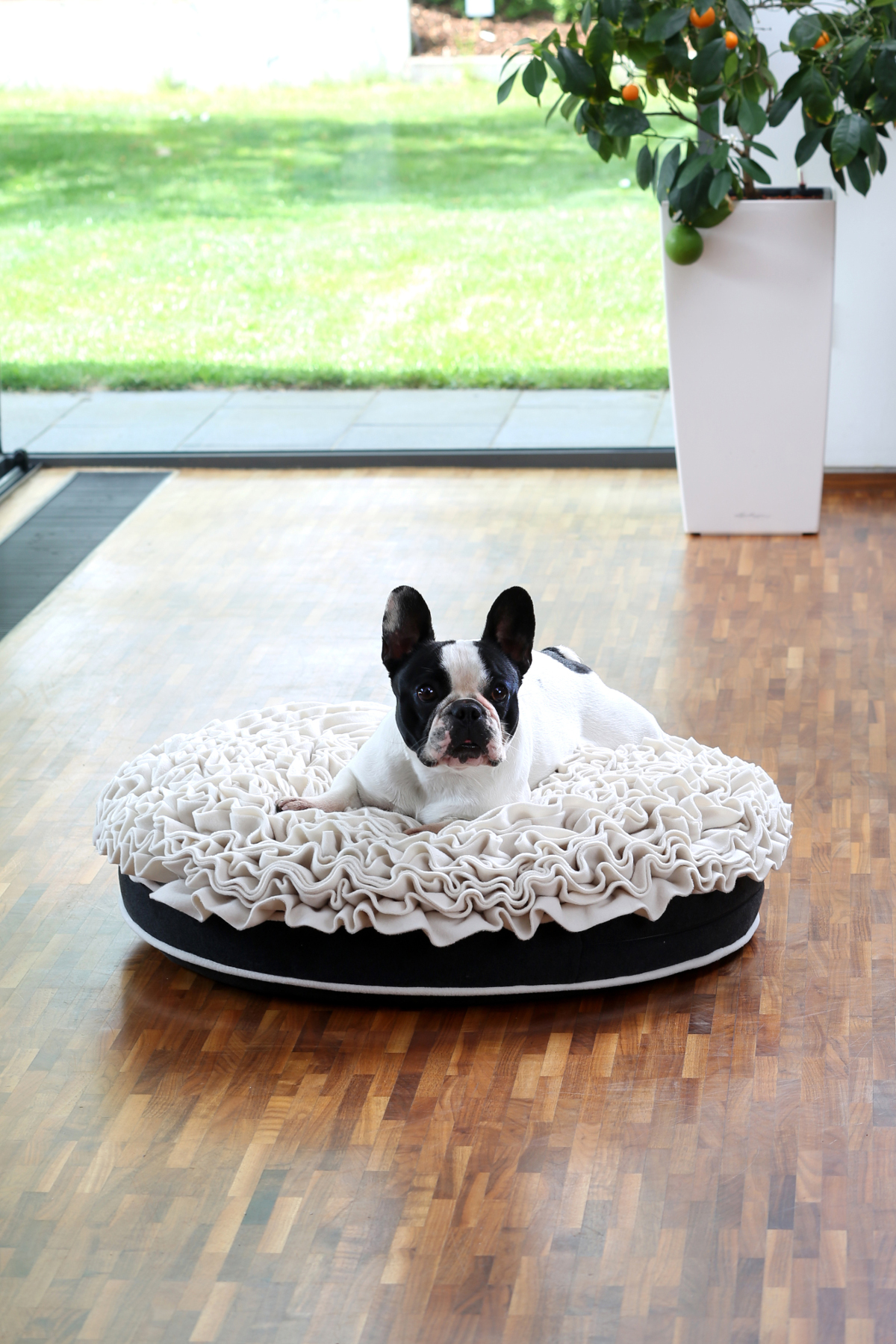Bed of Roses Dog Bed from Pet Interiors