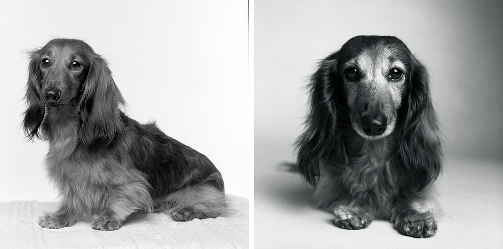 Dog Years: Faithful Friends Then & Now - Photography Book by Amanda Jones