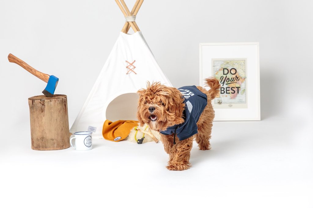 Camp Cloon: Premium Goods for Adventurous Dogs