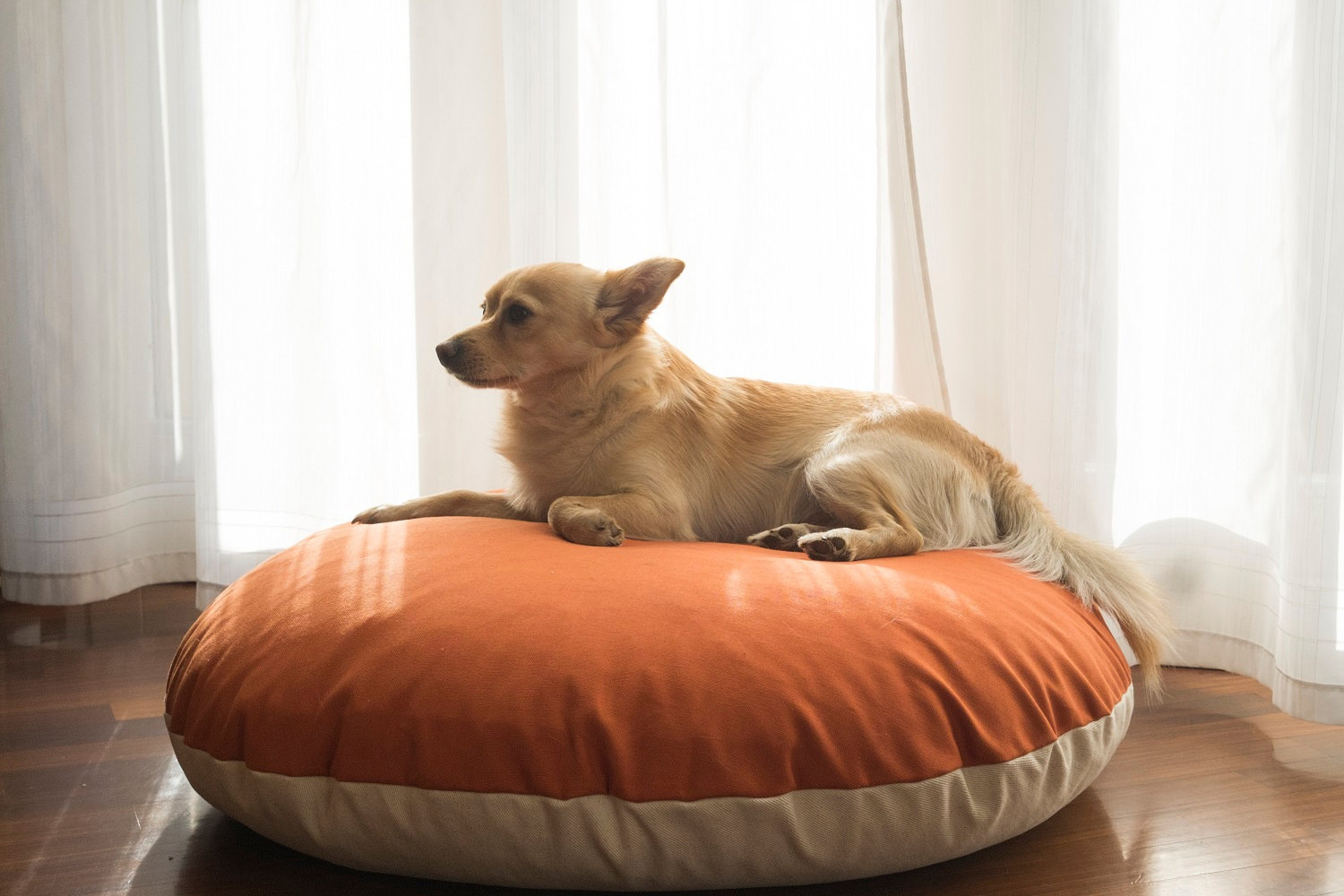 naps-design-modern-personalized-dog-beds-2