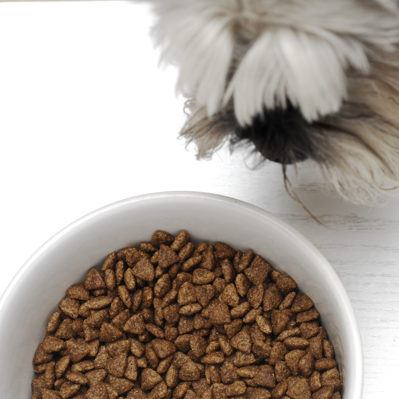 Solid Gold Premium Dog Food Review