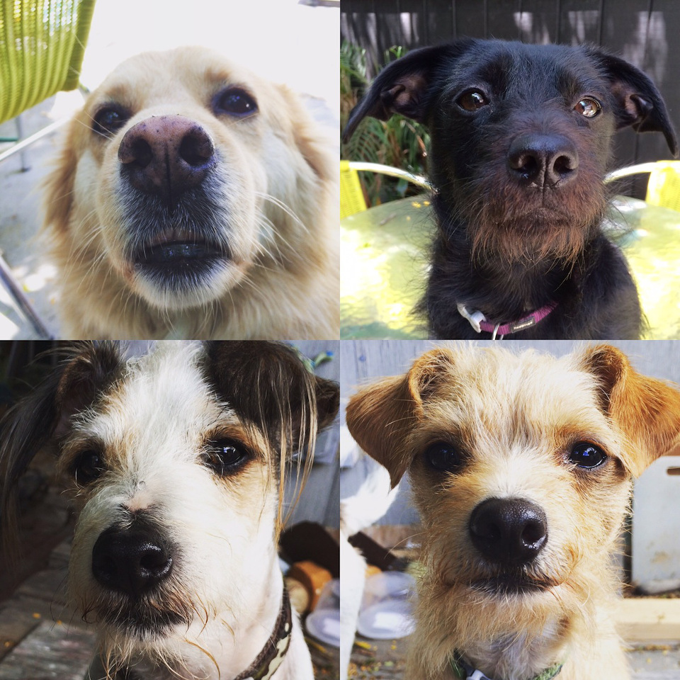 The Scoop: Rebecca Cox, Greta, Fred, Donut, and Lucie
