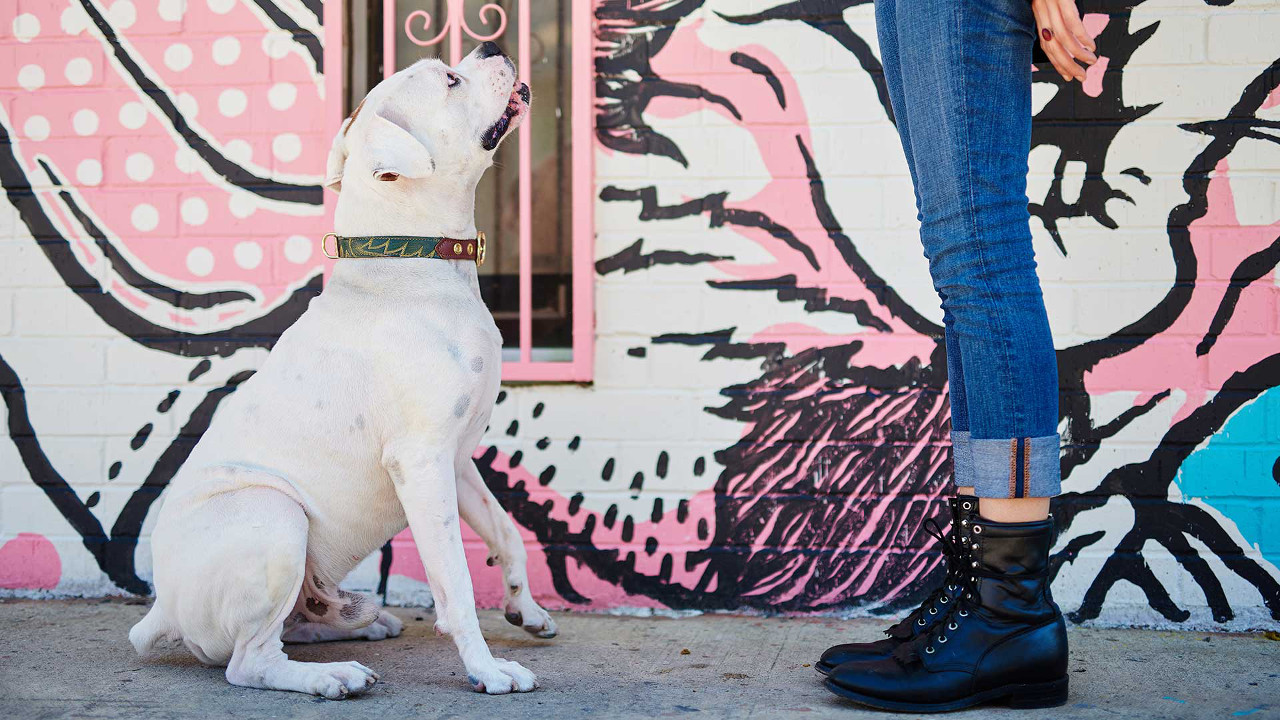Boots & Arrow: Handmade Leather Dog Collars from Upcycled Cowboy Boots