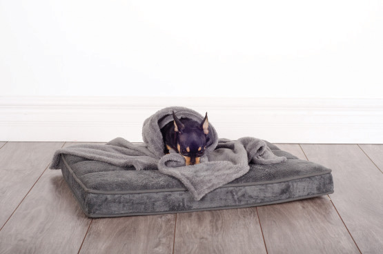 Be-One-Breed-dog-memory-foam-bed-and-blanket