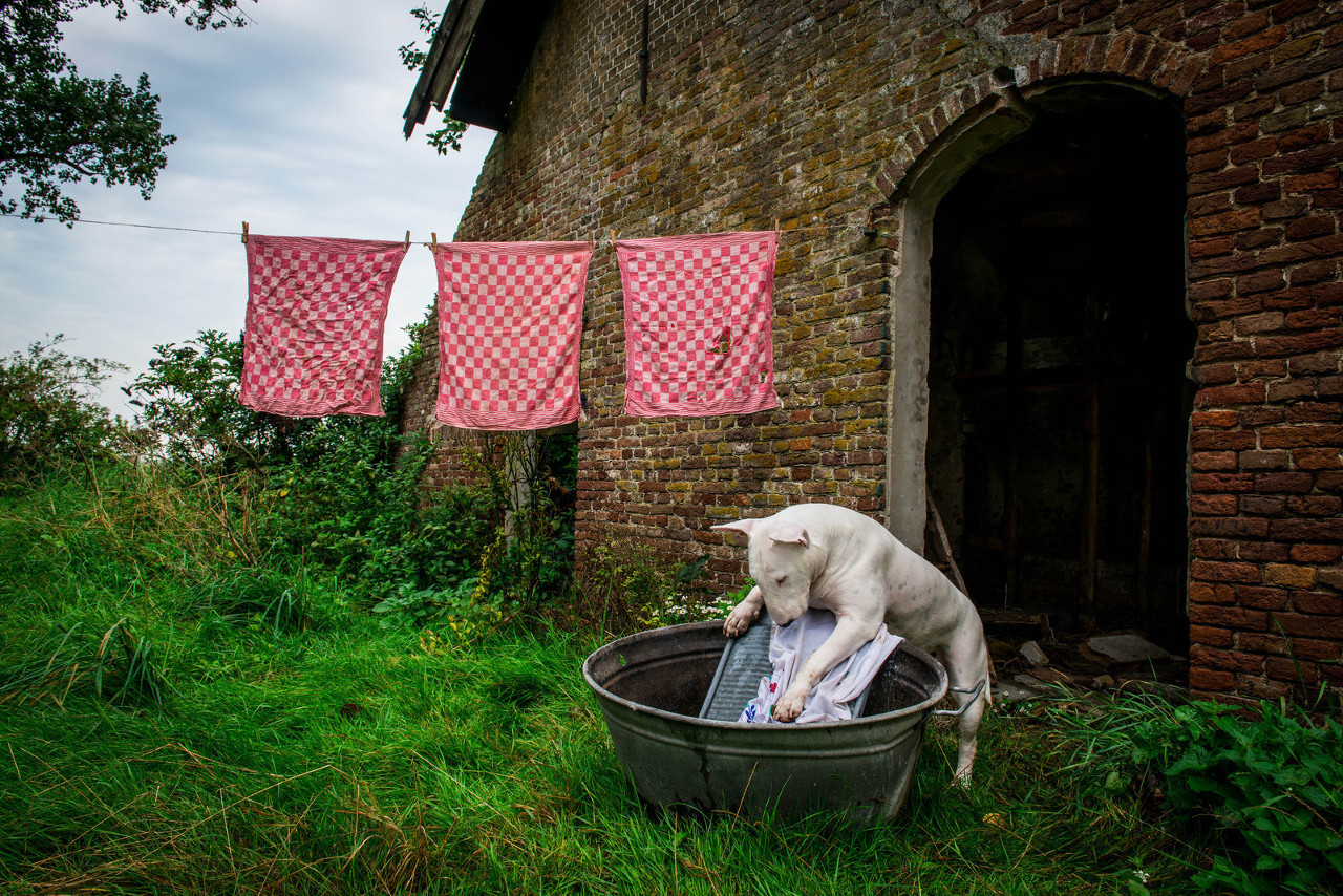 Dog Travel Photography from Alice van Kempen