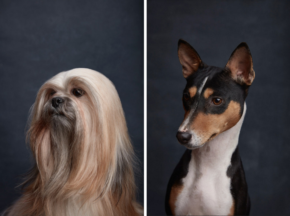Canine Collective: A Dog Breed Photo Series from Ty Foster