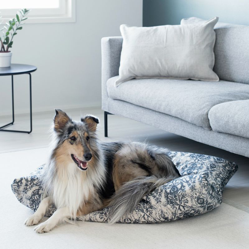 Nordic Design for Dogs from KIND