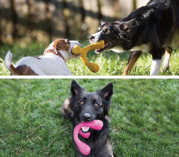 Wox: A New Interactive Dog Toy from West Paw Design