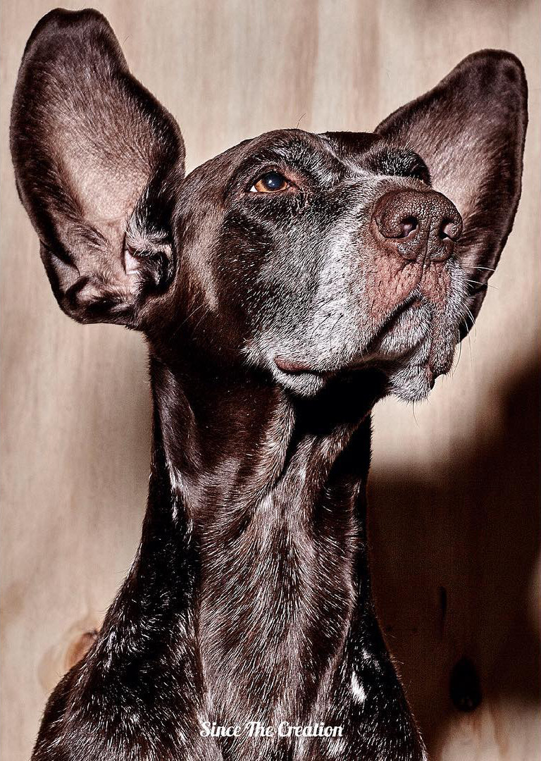 Dog Photography from Since the Creation