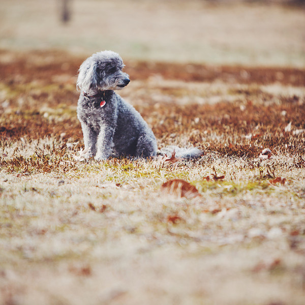 Dog Photography by Kristen Turick