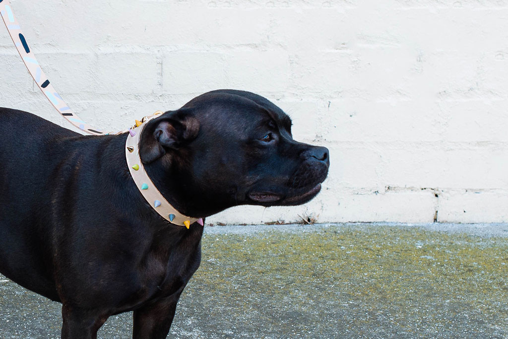 Colorful Leather Collars & Leashes from Nice Digs