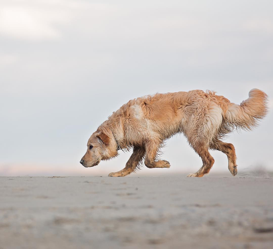 Instagram Love: Paws on the Run