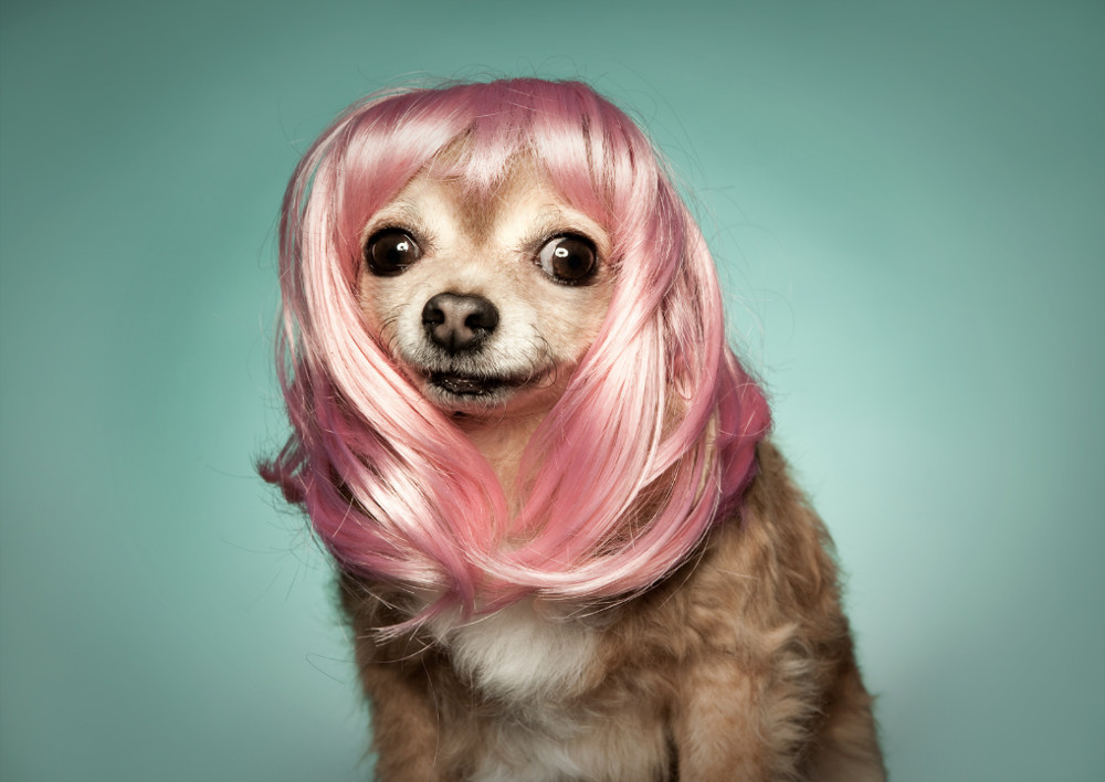 Dog Photography by Shaina Fishman