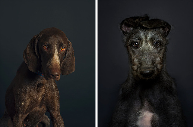 Dog Photography by Delphine Crepin